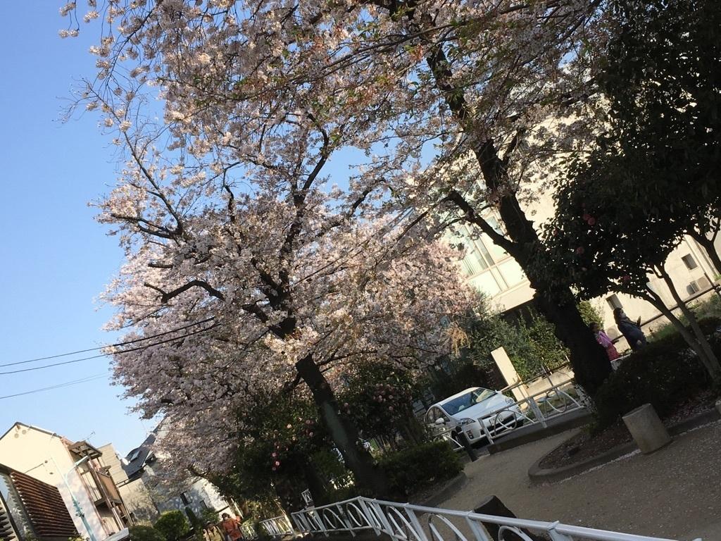 自由が丘~緑ヶ丘の桜道~♪